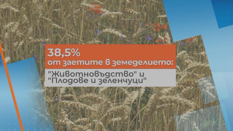 снимка 1 Увеличават директните плащания за земеделските производители