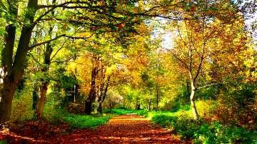 Нежно рисува есента