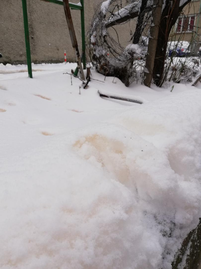снимка 5 Оранжево-жълт сняг валя в Шумен