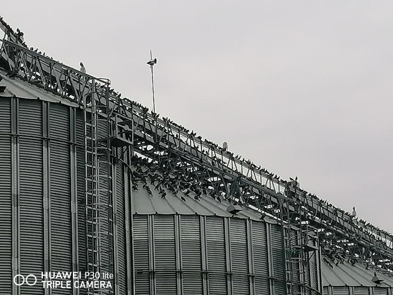 снимка 4 Пристанище Свищов и царството на гълъбите