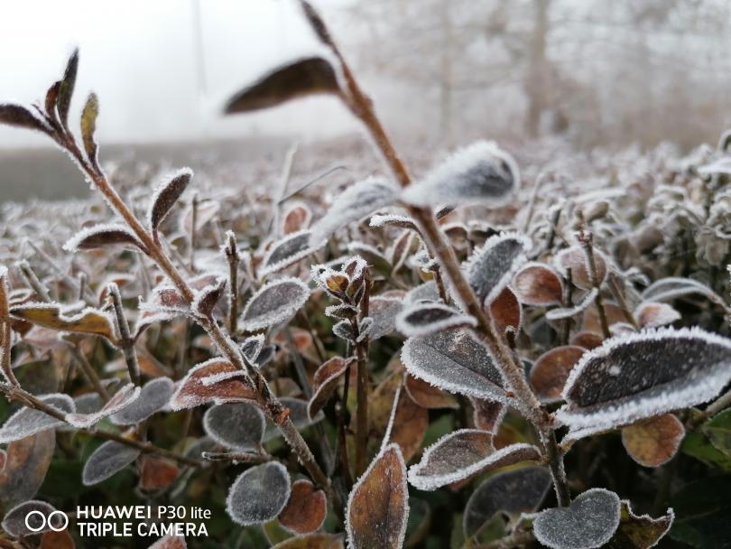 снимка 7 Красотата на мъгливия ден