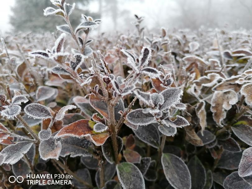 снимка 5 Красотата на мъгливия ден