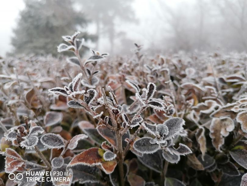 снимка 4 Красотата на мъгливия ден