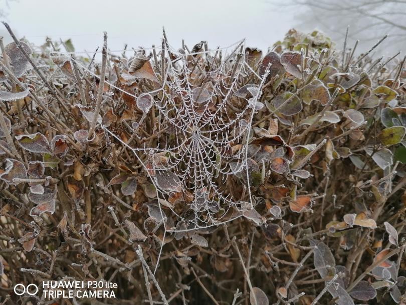 снимка 2 Красотата на мъгливия ден