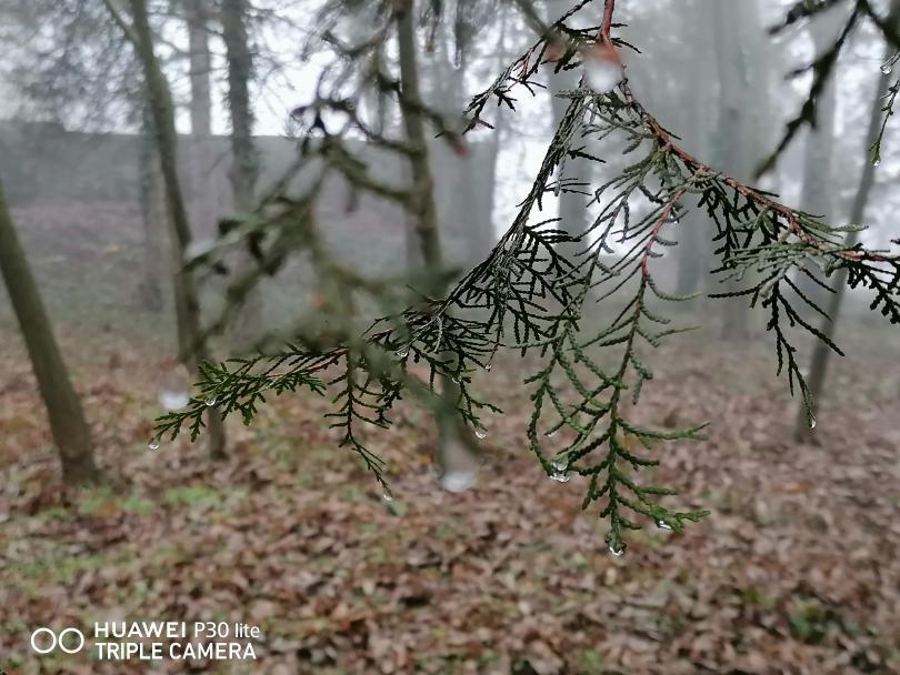 снимка 6 Капчици мъгла