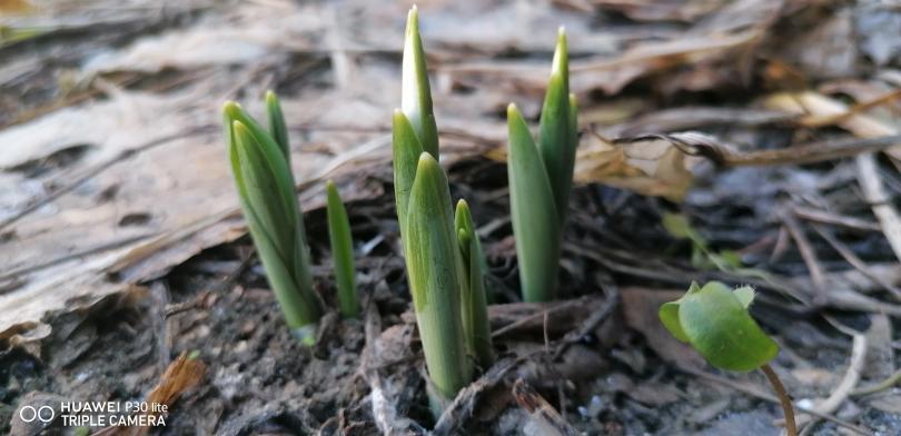 снимка 1 Предвестници на пролетта