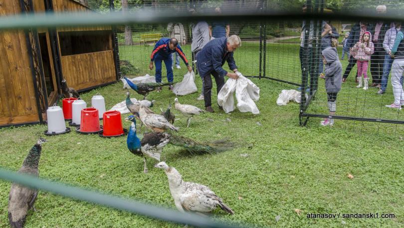 снимка 1 15 пауни бяха заселени в парк Св. Врач в Сандански