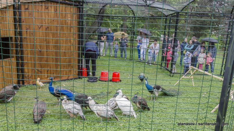 снимка 2 15 пауни бяха заселени в парк Св. Врач в Сандански