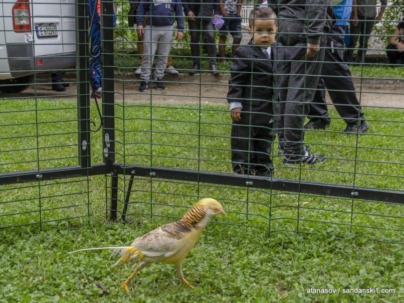 снимка 4 15 пауни бяха заселени в парк Св. Врач в Сандански