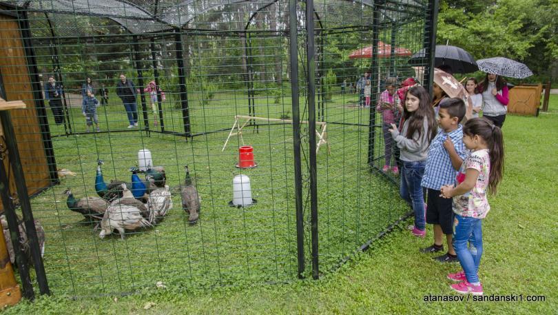 снимка 6 15 пауни бяха заселени в парк Св. Врач в Сандански