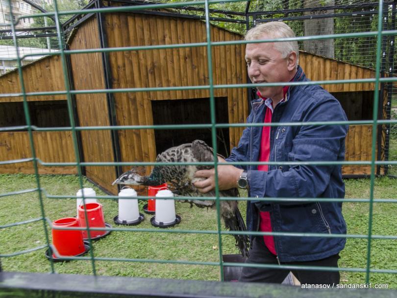 снимка 9 15 пауни бяха заселени в парк Св. Врач в Сандански