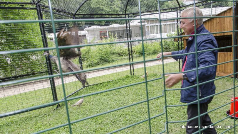 снимка 10 15 пауни бяха заселени в парк Св. Врач в Сандански