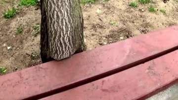 Дърво, изрязано за да се монтира пейка!