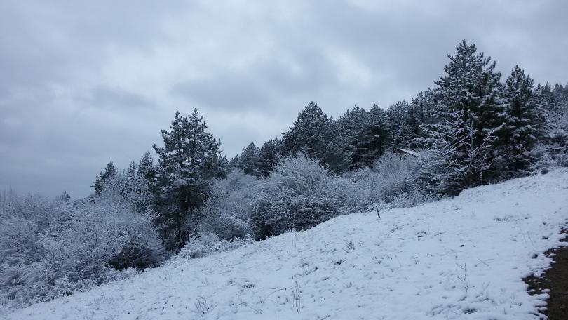снимка 6 Зимна поезия в Реброво