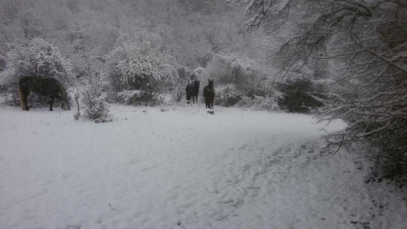 снимка 5 Зимна поезия в Реброво