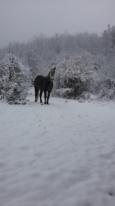 снимка 4 Зимна поезия в Реброво