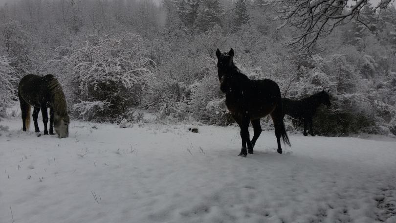 снимка 3 Зимна поезия в Реброво