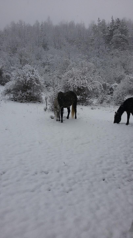 снимка 2 Зимна поезия в Реброво