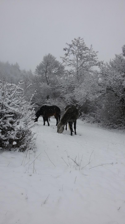 снимка 1 Зимна поезия в Реброво