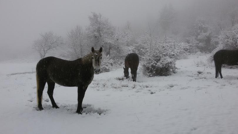 Зимна поезия в Реброво