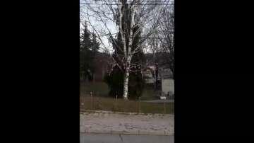 Мартенско дърво до коледна елха във Владая!