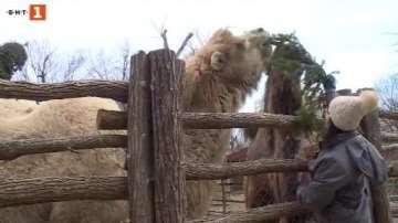 Варненският зоопарк приема коледни елхи за менюто на животните