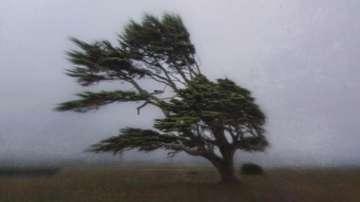 Какво трябва да правим при силен вятър?
