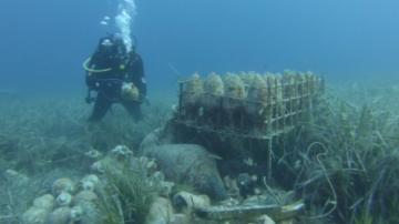 Сомелиерско новаторство: Вино отлежава под вода в Хърватия