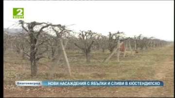 Повишен интерес за създаване на овощни дръвчета от сливи и ябълки в Кюстендилско
