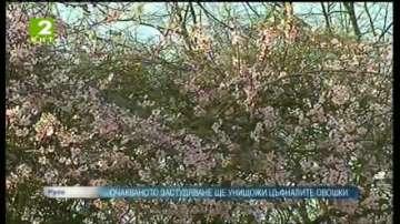Очакваното застудяване ще унищожи цъфналите дръвчета