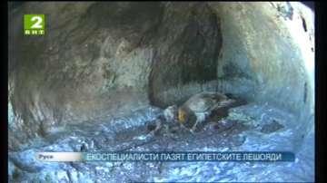 Екоспециалисти пазят египетските лешояди