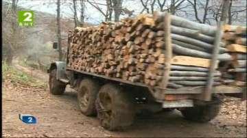 Над 340 проверки в София от Агенцията по горите