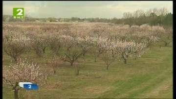 Тежка пролет за овощарите в Дунавския регион