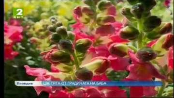 Цветята от градината на баба