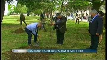 Засадиха 30 фиданки в Борово