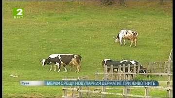 Мерки срещу нодуларния дерматит при животните