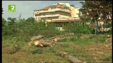 Община Варна разреши сеч на 50-годишни борове