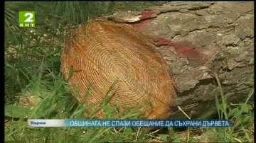 Община Варна не спази обещание да съхрани дървета