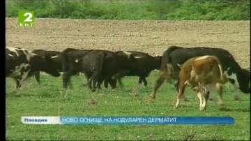 Огнище на нодуларен дерматит в село Виница