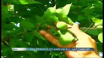 Нулева реколта от кайсии отчитат в тутраканското село Цар Самуил