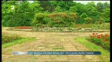 27 вида рози красят русенския парк