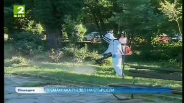 Премахнаха гнездо на стършели в Пловдив