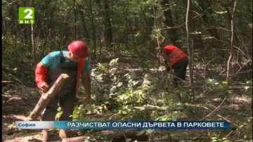 Разчистват опасни дървета в парковете в  София