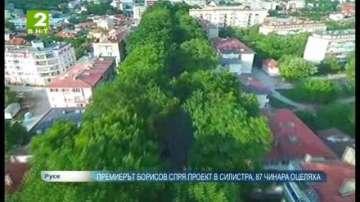 Премиерът Борисов спря проект в Силистра, 87 чинара оцеляха