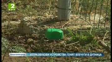 Ултразвукови устройства гонят влечуги в Дупница