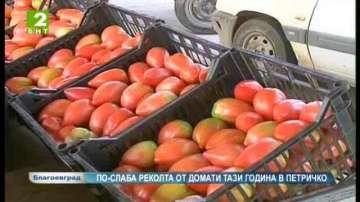 По-слаба реколта от домати тази година в Петричко