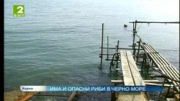 Има и опасни риби в Черно море