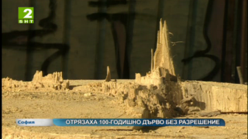 Отрязаха 100-годишно дърво в София без разрешение