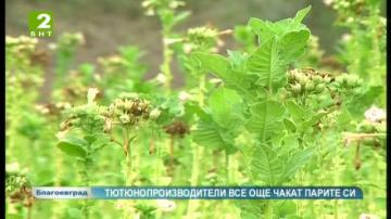 Тютюнопроизводители все още чакат пари за миналогодишната реколта