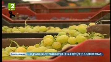 С добро качество и висока цена е гроздето в Благоевград